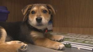 Province looking to legislate veterinarian fees