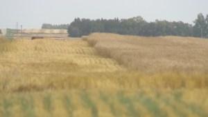 Saskatchewan grasslands shrinking