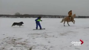 Brendan Parker introduces us to the little known sport of skijoring