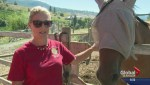 Naramata farmer puts out public appeal