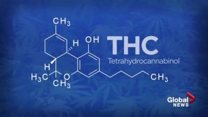 How different types and strains of medical cannabis treat patients