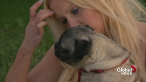 Gil Tucker: Pug reunited with owner 5 years after being stolen