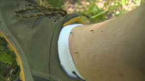 Okanagan experiencing 'Mosquitopalooza'