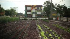 Urban farming is about more than food in Detroit