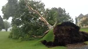 High winds tear down trees near Yarmouth