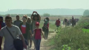 Mental health professionals concerned over stretched resources ahead of refugee influx