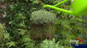 Gardenworks: Making Kokedama