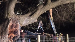 Great Dane stuck 7 metres up tree rescued by firefighters