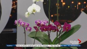 Classic Landscaping: Caring for orchids + preparing for spring