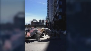 Calèche horse, car collide in Griffintown