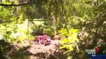 Kelowna woman makes gruesome discovery in her backyard