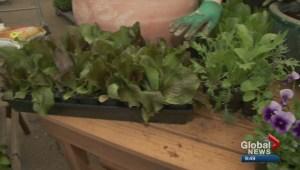 Gardening: Salad bowl