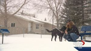 Blind Calgarian denied cab ride because of guide dog