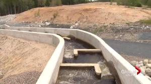 Massive fish ladder opens up new habitat