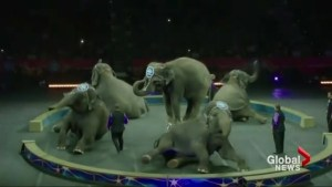 Ringling Bros. Circus to close after 146 years of operation