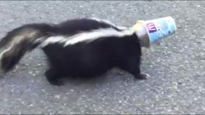 Ont. woman comes to the aid of skunk with cup stuck on its head