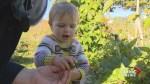 Two-year-old gardener harvests her crop