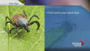 Ticks abundant but Lyme disease still very rare