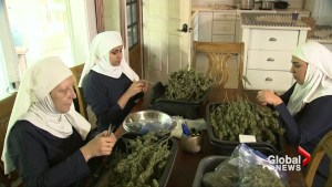 'Weed nuns' could bring cannabis healing mission to Canada