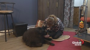 Moncton woman pays it forward with grooming shop aimed at special needs pooches