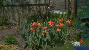May long weekend: To garden or not to garden?