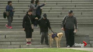 Ontario family make human rights complaint after service dog denied in B.C.