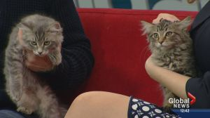 Pet of the Week: Buzz and Bumble