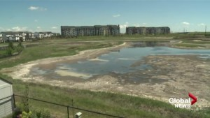 'Just mud and bad smell': Copperfield residents concerned about disappearing wetland
