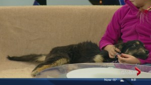 SCARS stops by with a few pups looking for forever homes