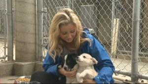 Adopt a Pet: Oct 20