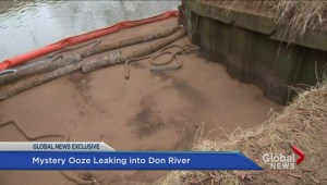 'Petroleum-like material' found oozing into Toronto's Don River