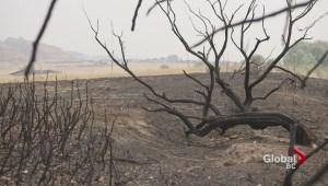 Heat wave wildfire impact
