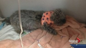 Calgary Animal and Bylaw Services investigate fatal dog attack