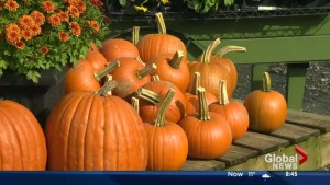 Last minute pumpkin carving tips