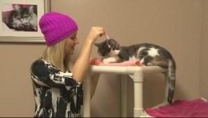 Adopt a Pet: Jan 19