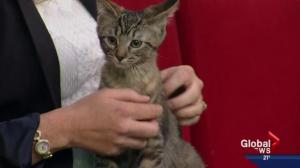 Pet of the Week: Yasella