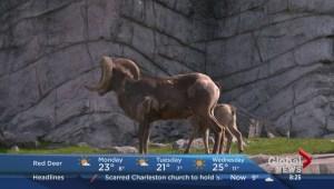 Mike Auer – Calgary Zoo