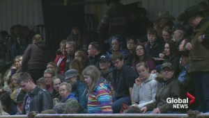 Saskatchewan Equine Expo attracts thousands of visitors