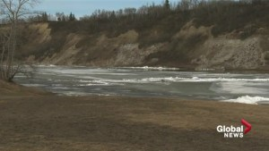 Therapy dog swept into river at Terwillegar Dog Park
