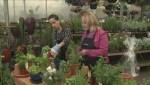 Gardening: Easy Hostess Gifts