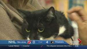 Adopt-A-Pet: Pepe the Cat