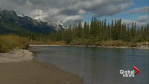 Whirling disease could impact the fish population in western Canada
