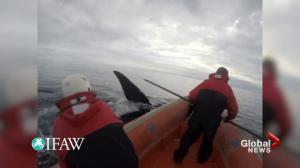 Marine animal rescue group calls for 'action' on whale entanglement pause