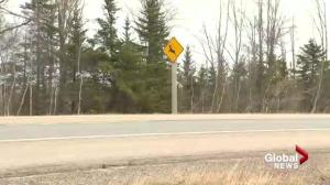 Animals killed on N.B. highways nearly double this spring: Province