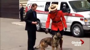 Service dog that worked with fallen RCMP officer attends memorial service