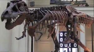 Study: Humans could have outrun a Tyrannosaurus Rex