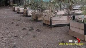 East Van community garden rat infestation