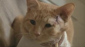 Cat takes stray bullet, saving 3-year-old boy
