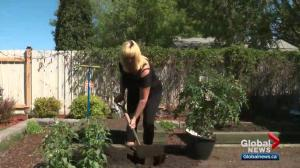 How to avoid back pain from gardening