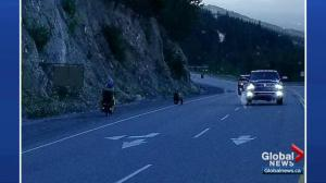 Quick-thinking drivers save cyclist from possible bear attack on B.C. highway